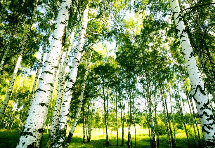 Padup models are made from FSC Certified Birch plywood. Forest Stewardship Council (FSC) ensures that the harvest of timber maintains the forest's biodiversity, productivity, and ecological processes.