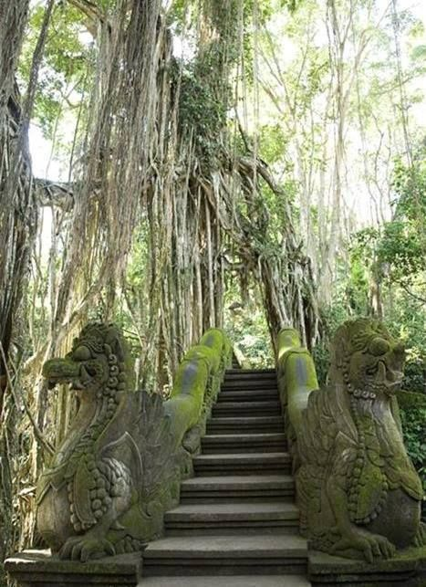 Walk through the Monkey Forest Sanctuary in Ubud, Indonesia
