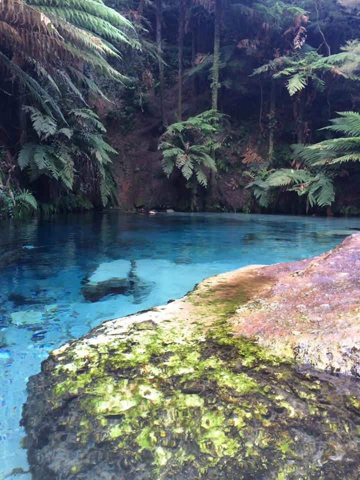 Blue Springs, New Zealand #newzealandwalkingtours https://newzealandwalkingtours.com
