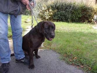 Chiens a adopter -2-