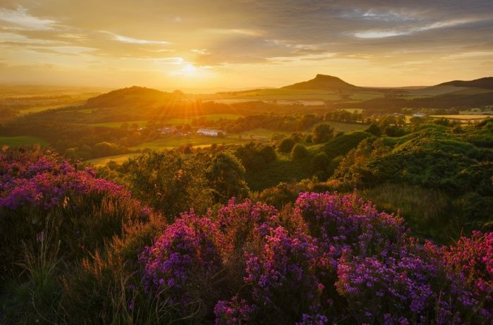Heather in bloom, Roseberry Topping, North Yorkshire, winner of the countryside is great category