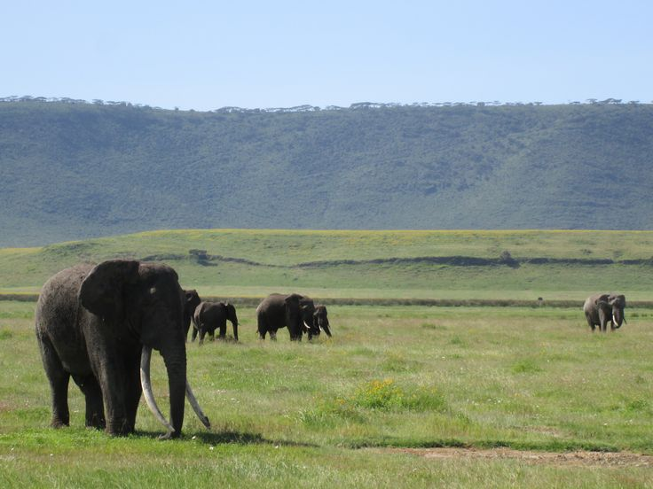 #Safarisoulmates -the biggest elephant we have ever seen!! What a tusker!
