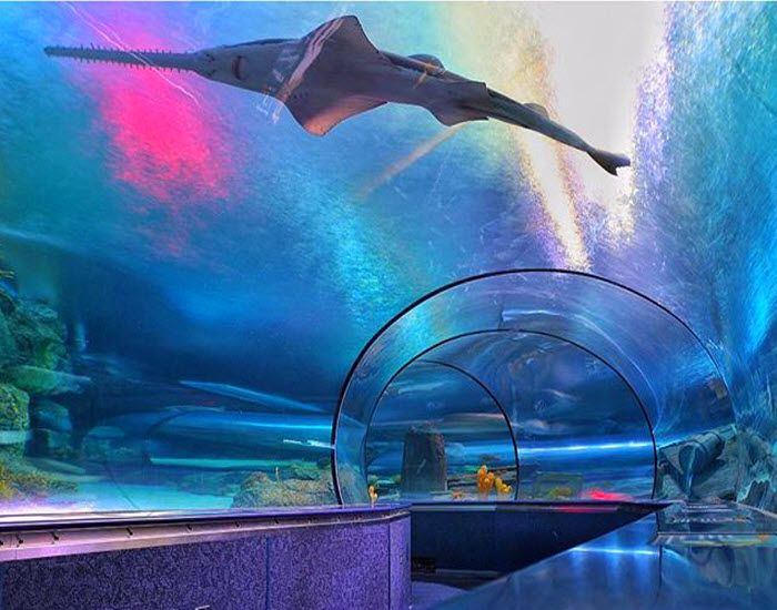 Walk this way and sea what's lurking at Ripley's Aquarium in Myrtle Beach, South Carolina! It's a fun and educational experience for the entire family! (Photo via Instagram by @ryanburtphotography - Click on the pin for more info and other things to do)