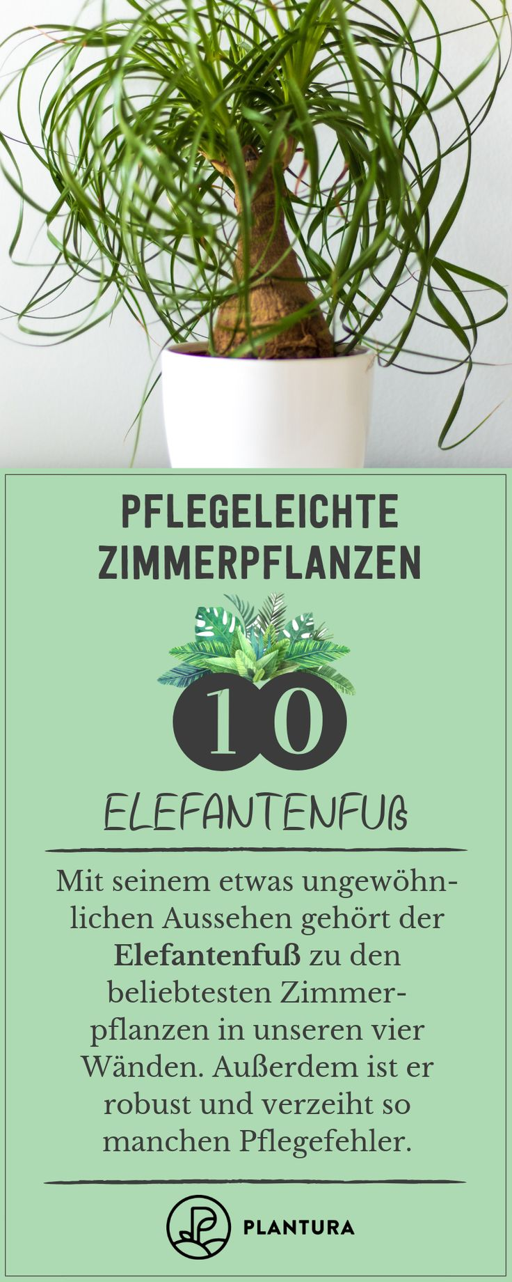 Pflegeleichte Zimmerpflanzen: Unsere Top 10 für Wohnung & Haus