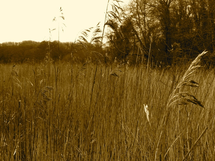 Stackpole estate/Lily ponds in Pembrokeshire. A lovely place to walk or just wander. . .