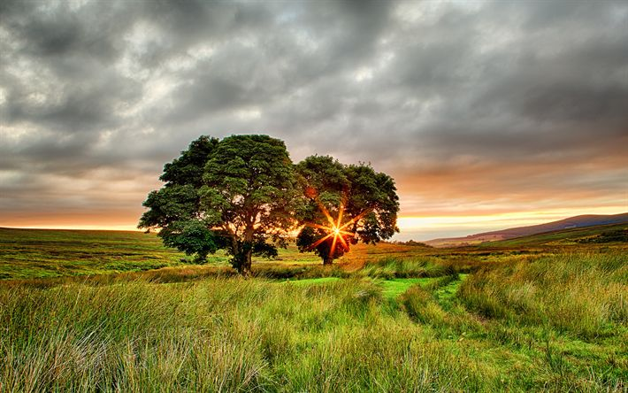 Download wallpapers Ireland, summer, field, sunset, two trees, Europe