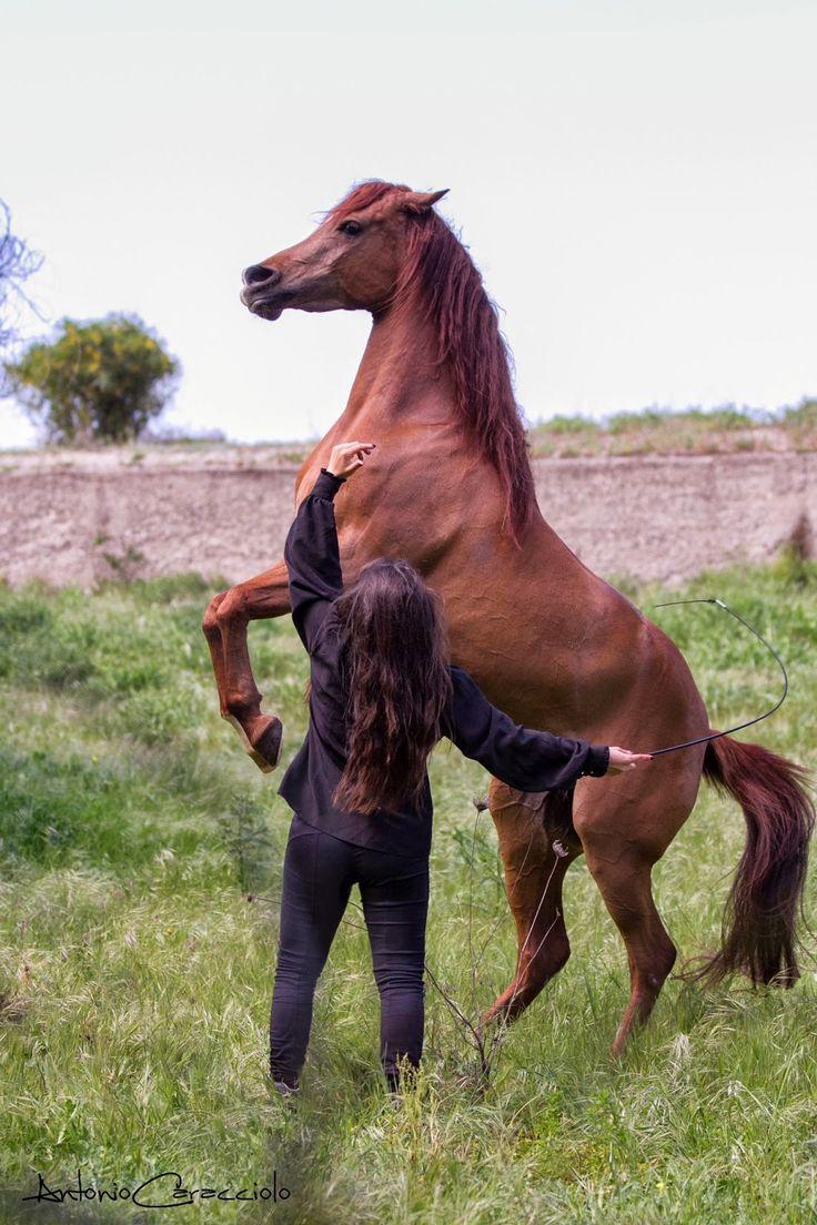 Lilianne - amazing arabian horse Photo: Antonio Caracciolo