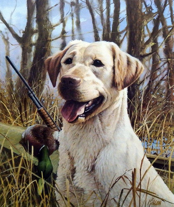 A great hunting dog print for sale--THAT'S MY DOG-YELLOW LAB by James Killen. Yellow labs are very popular in the U.S., being exceptionally well tempered and great with kids. This breed is known for b                                                                                                                                                                                 More