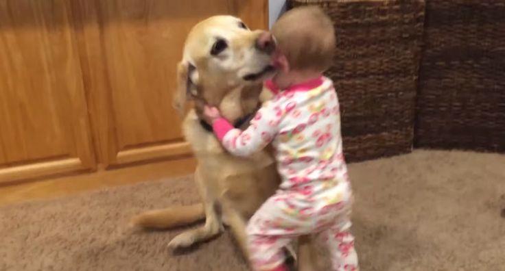 Babys und Hunde - super süßes Video (Teilen!)