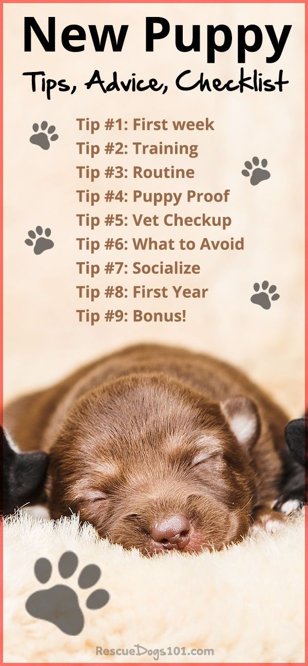 First Time Dog Owners Guide Checklist Tips Puppies Tips New