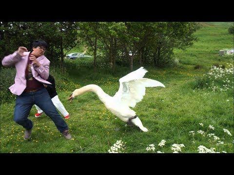 When Birds Attack - YouTube