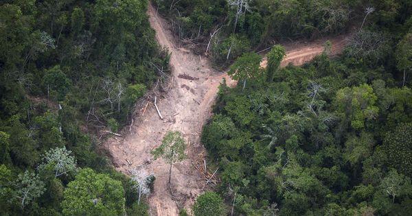 Brésil : la déforestation de l'Amazonie recule de 18% en un an