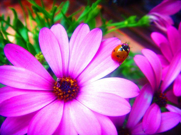 Flor e insecto en el jardín | ツ YOUR favourite NATURE (No Animals) Pins