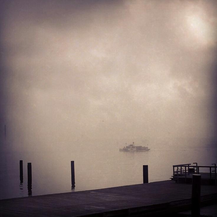 Freya im Nebel