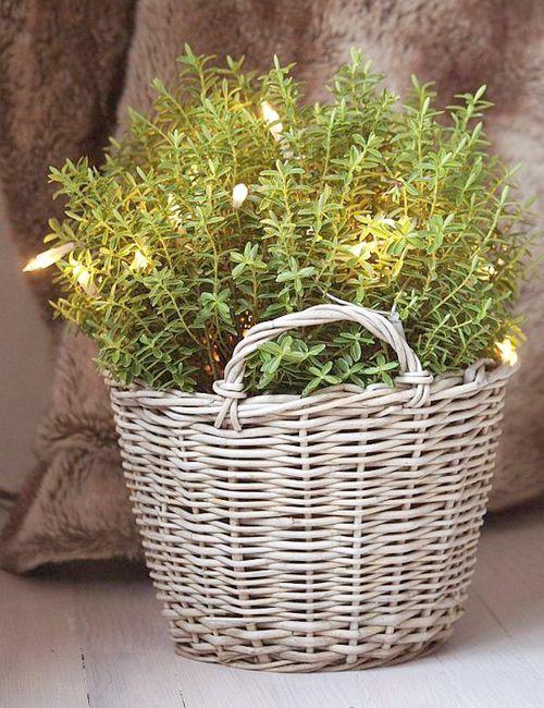 Planta en cesta de mimbre • Rattan basket covering a pot