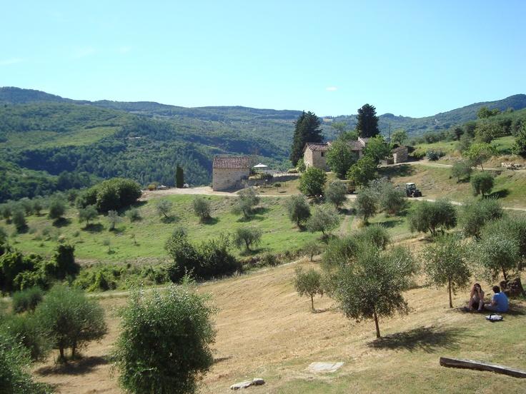 Castello del Trebbio Vineyard - Tuscany, Italy