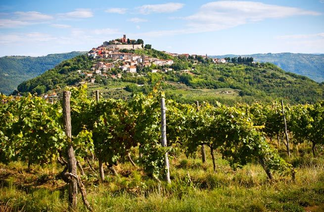 """WINE Vineyards produce excellent wines, many from Istrian villages like Motovun. Sometimes touted as """"the new Tuscany,"""" Istria is known for its white Malvazija and red Teran."""