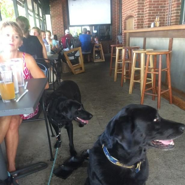 Bring Fido To The Climate Controlled Patio At Cantina 76 In Columbia Sc Pet Friendly Restaurants 2018 Pinterest Restaurant And Dog