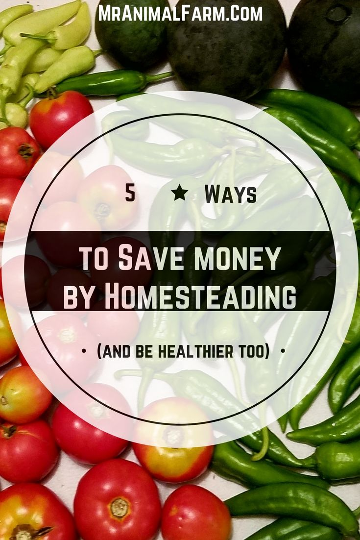Save money homesteading?  Yes, you can save money homesteading. Find 5 simple ways to get started today!