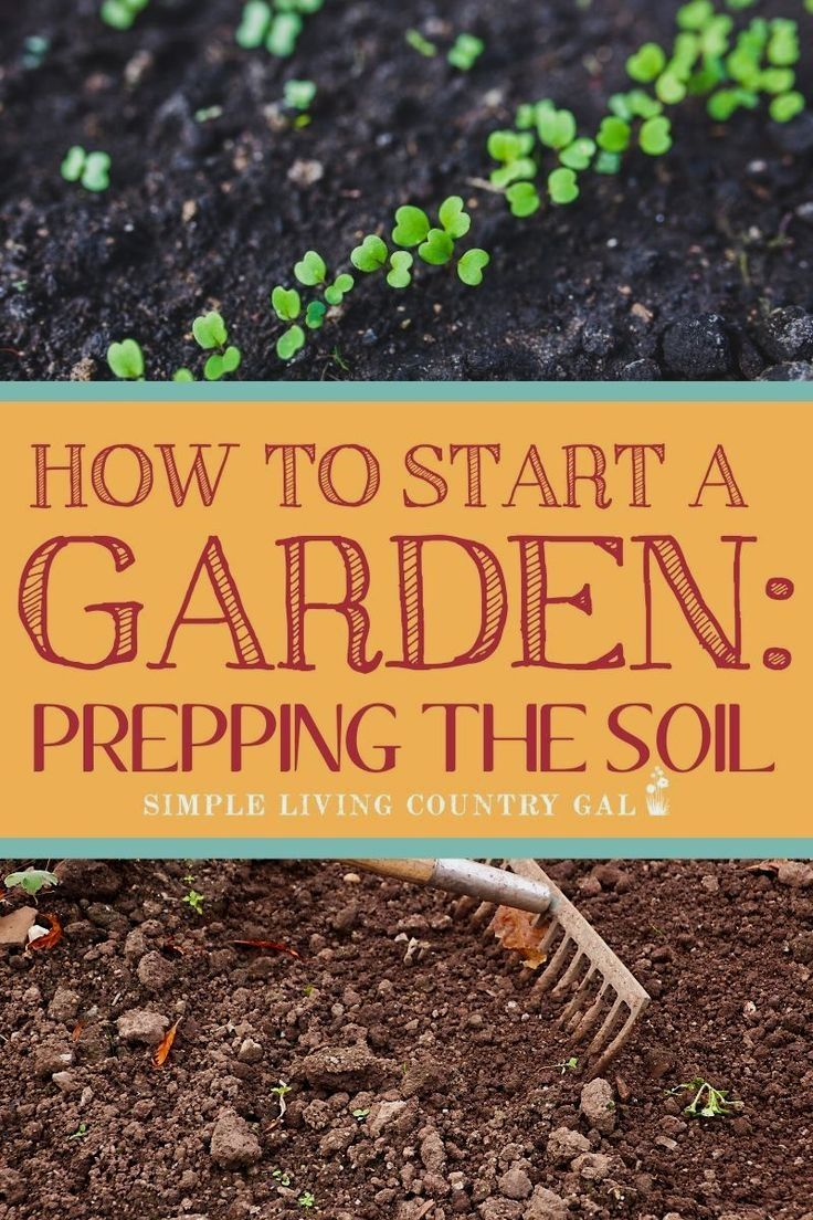 The Steps You Need To Take Before You Plant Your Garden This Season In 2020 Organic Gardening Tips Starting A Garden Backyard Vegetable Gardens