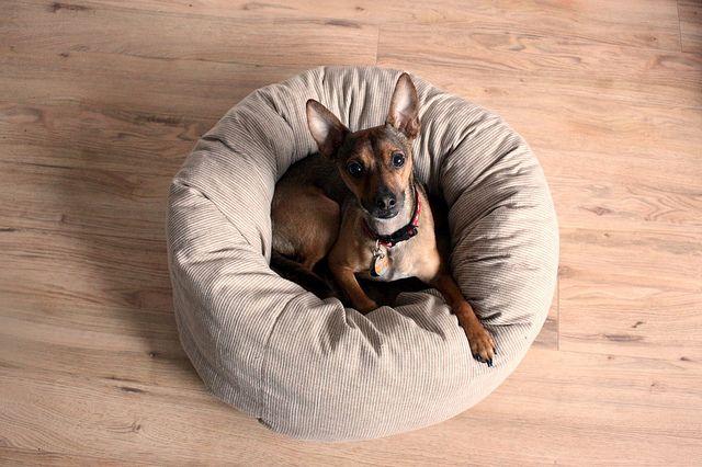 Round dog bed pattern by SmallHomeBigStart, via Flickr