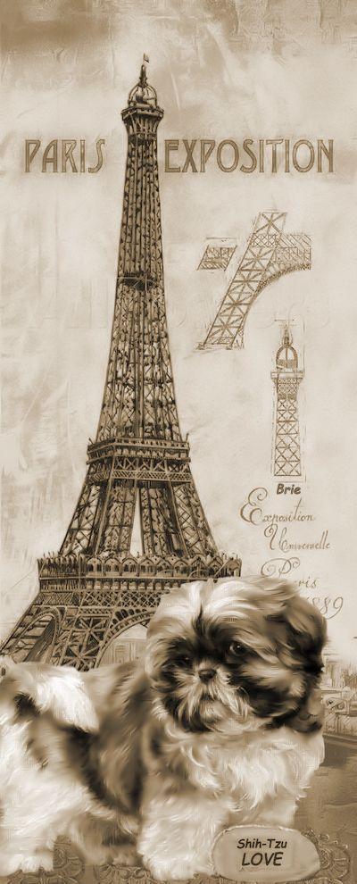 Brocante Brie, shih-tzu plaatje Paris
