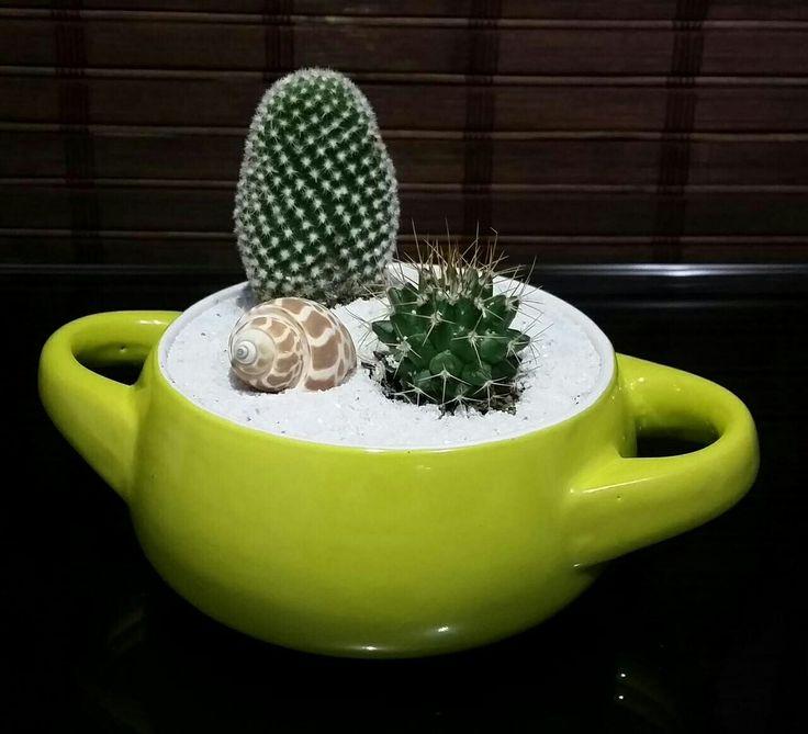 Cacti friends !!!! Cactus
