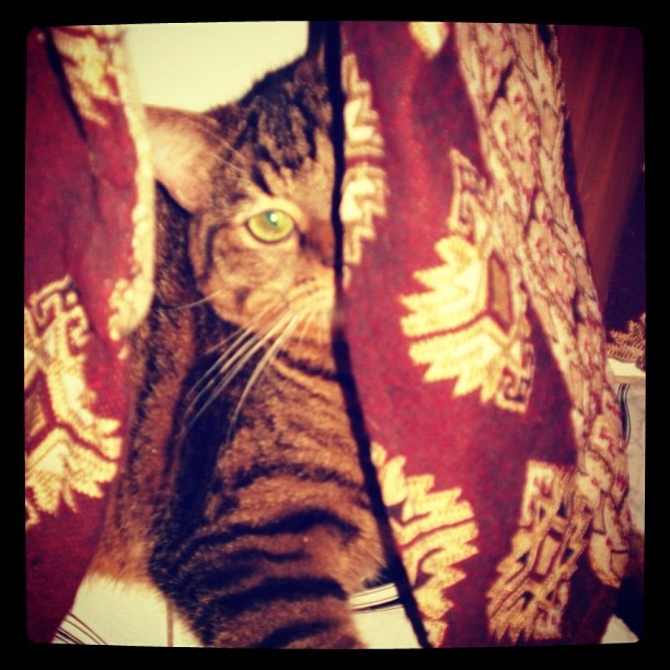 Can you see me? #Antonio: Forgot Password