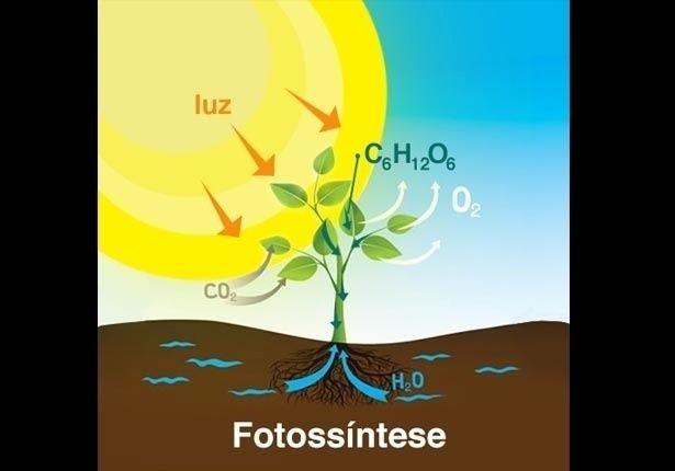 BIOLOGIA (Fotossíntese): A fotossíntese é o processo pelo qual as plantas fabricam açúcares. Neste processo, o gás carbônico se combina com a água e com a energia da luz solar transformando-se em açúcar e oxigênio