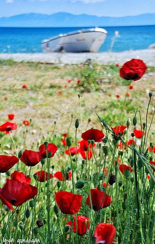 Spring in Bodrum . Turkey