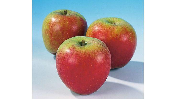 Alte Apfelsorten - Alkemene