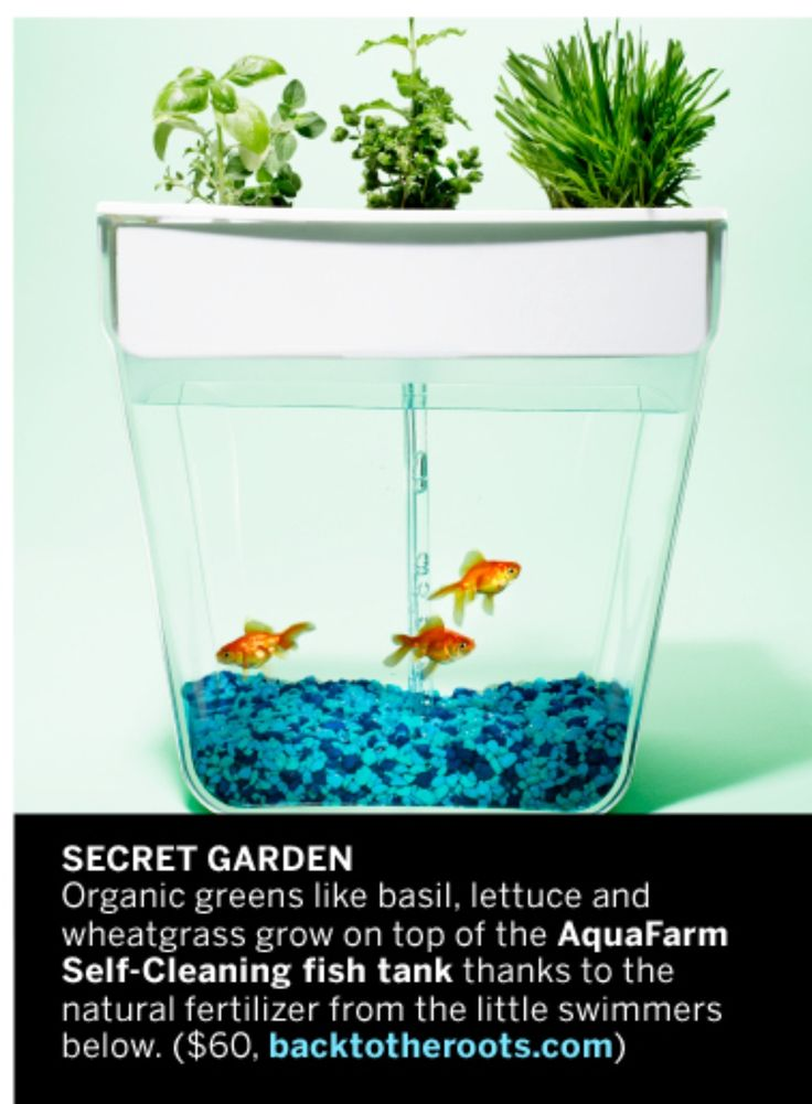 43 best fish tanks images on pinterest aquarium ideas for Growing plants with fish