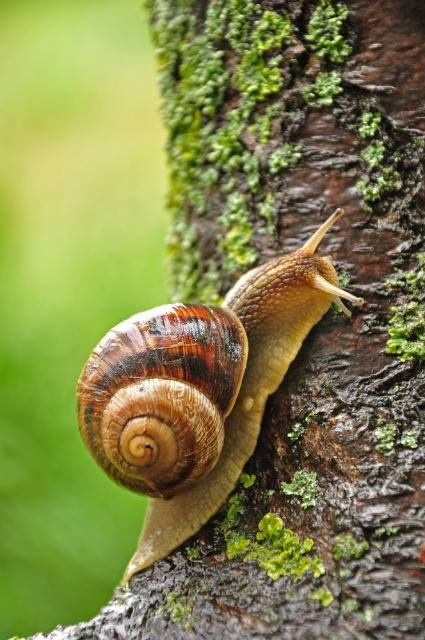 snail = can be found in a very wide range of environments, including ditches, deserts, and the abyssal depths of the sea