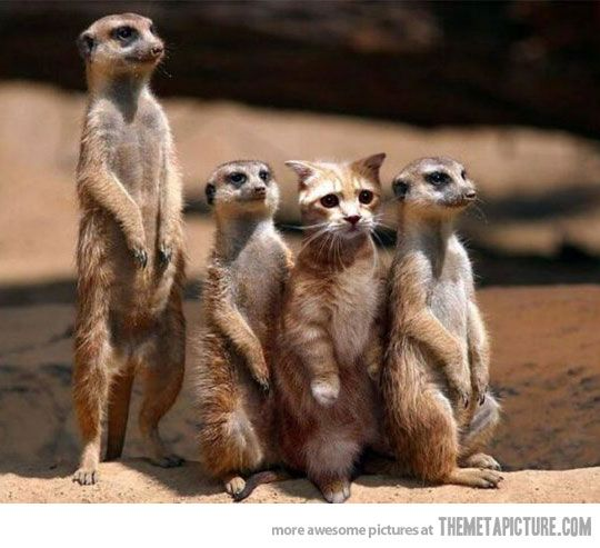 Blending in: Cats, Animals, Funny Stuff, Funnies, Humor, Funny Animal, Photo