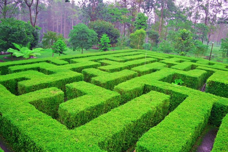 Lokasi dan Harga Tiket Masuk Taman Labirin Coban Rondo Malang, Serunya Bermain Petak Umpet di Tengah Tumbuhan Hijau - http://www.dakatour.com/lokasi-dan-harga-tiket-masuk-taman-labirin-coban-rondo-malang-serunya-bermain-petak-umpet-di-tengah-tumbuhan-hijau.html