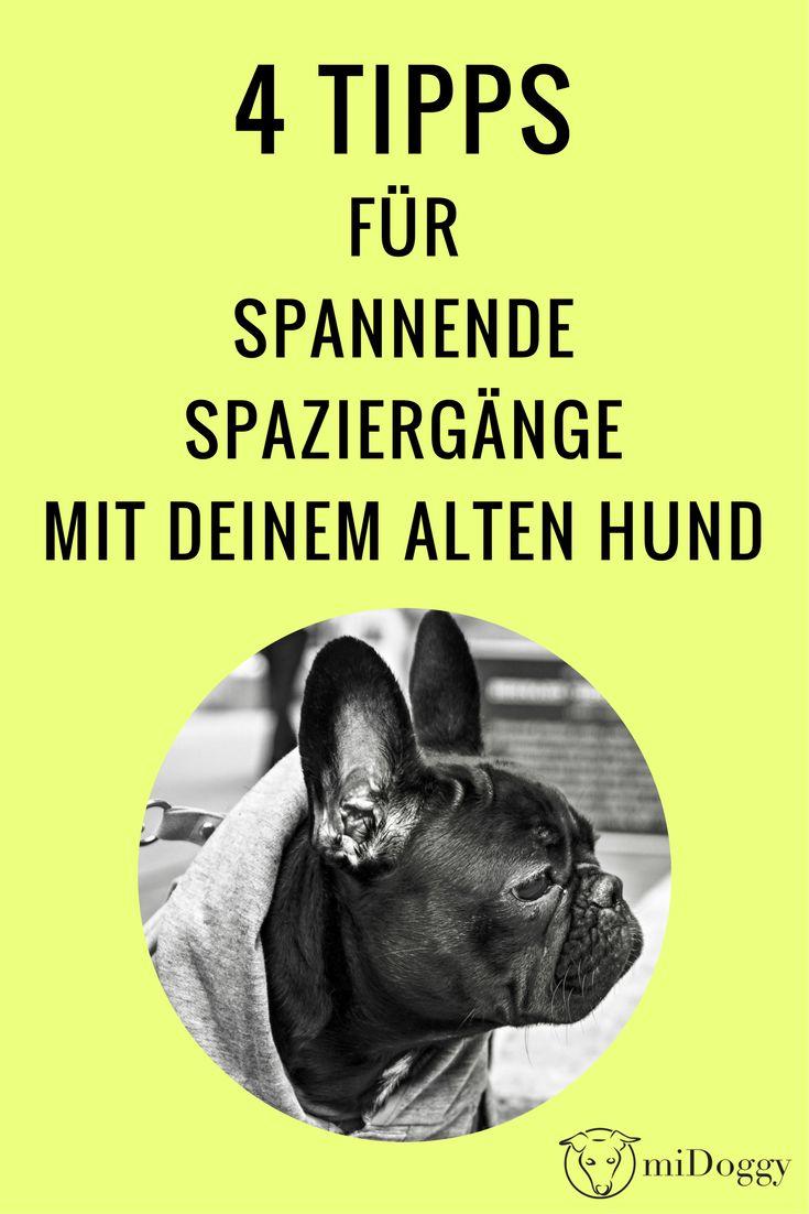 Spannender Spaziergang   alter Hund   Tipps   Ideen