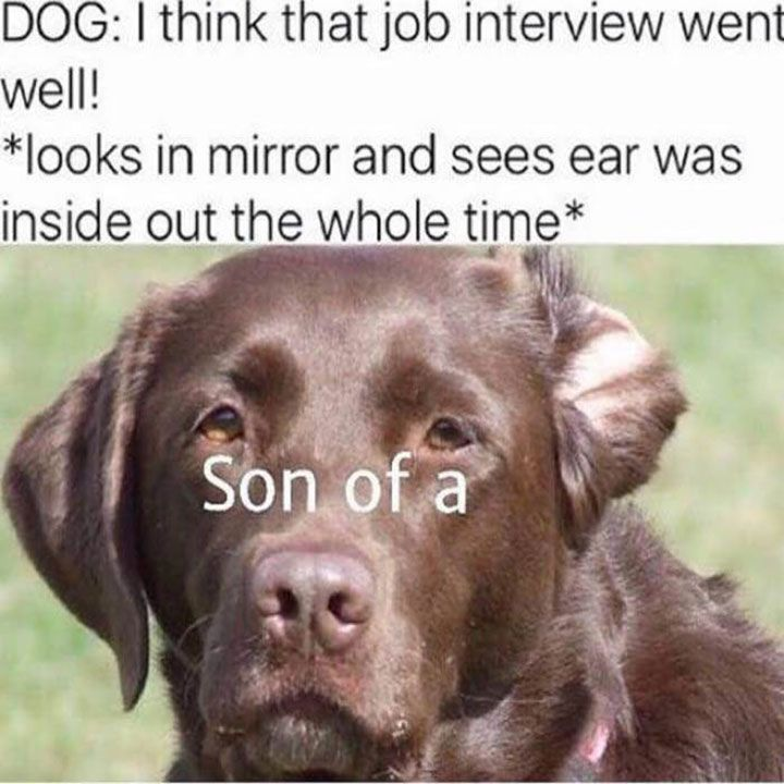 Justviral Co Funny Dog Fails Funny Dog Memes Funny Animal Pictures