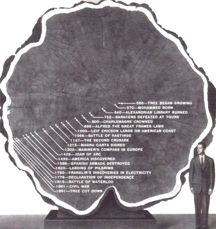 from Camilo tree-rings dating method