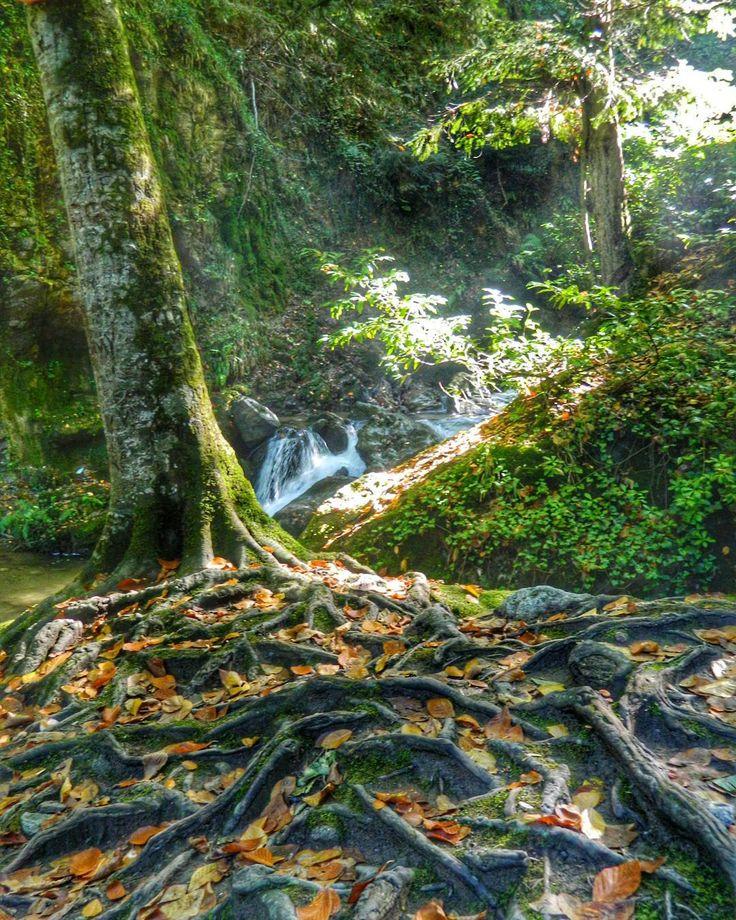 "48 Beğenme, 3 Yorum - Instagram'da Ü z e y i r  K a y a (@turkcuzeyir): ""#nature #naturelovers #hdr #hdr_pics #gününkaresi"""