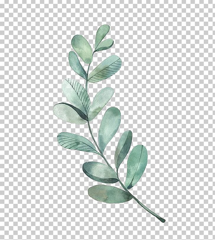 Watercolor Painting Leaf Illustration Png Art Behance Branch Drawing Eucalyptus Poster Bunga Latar Belakang Bunga Bunga Peony
