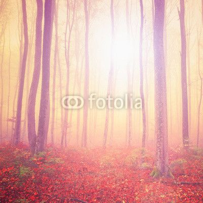 Magic light forest ©robsonphoto
