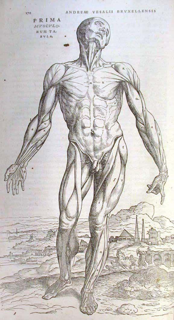 38 best Andreas Vesalius images on Pinterest | Andreas vesalius ...