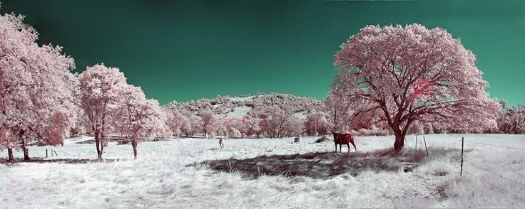 Cool Photo Effects - Infrared Photography By Evan Sharboneau  Download Trick Photography & Special Effects e-Book http://evan-sharboneau-trick-photography.blogspot.com/  Cool Photo Effects Facebook Fan Page : https://www.facebook.com/CoolPhotoEffectsOnline