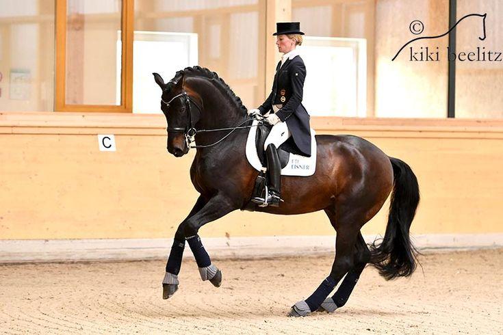 Damsey FRH by Dressage Royal/Ritual won his first international Grand Prix with Helen Langehanenberg at the 2016 CDI Mannheim.