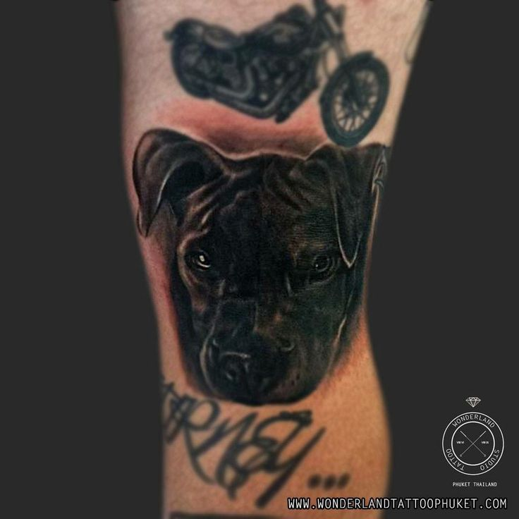Dog portrait tattoo.  For appointment or design tattoo please contact   WEBSITE: www.wonderlandtattoophuket.com FACEBOOK: www.facebook.com/wonderland.tattoo.phuket EMAIL: wonderlandtattoo86@gmail.com INSTAGRAM: wonderlandtattoo_phuket   #Thailand #Thailandtattoo #Phuket #Phukettattoo #Patong #Patongtattoo #Tattoo #Tattoos #WonderlandTattooPhuket