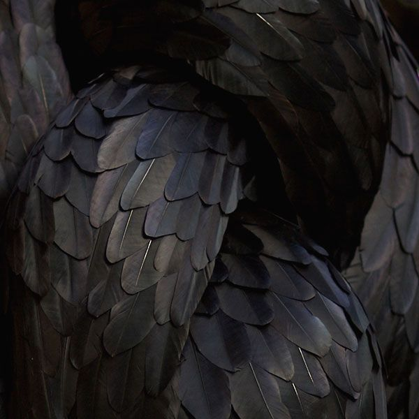 feathers, Kate MccGwire #feathers #katemccgwire #black