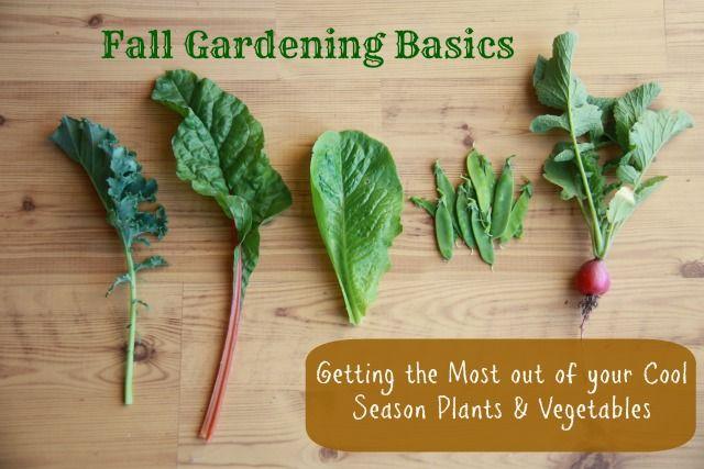 Five Little Homesteaders: Fall Gardening 101 / http://www.littlehomesteaders.com/2013/09/fall-gardening-101.html