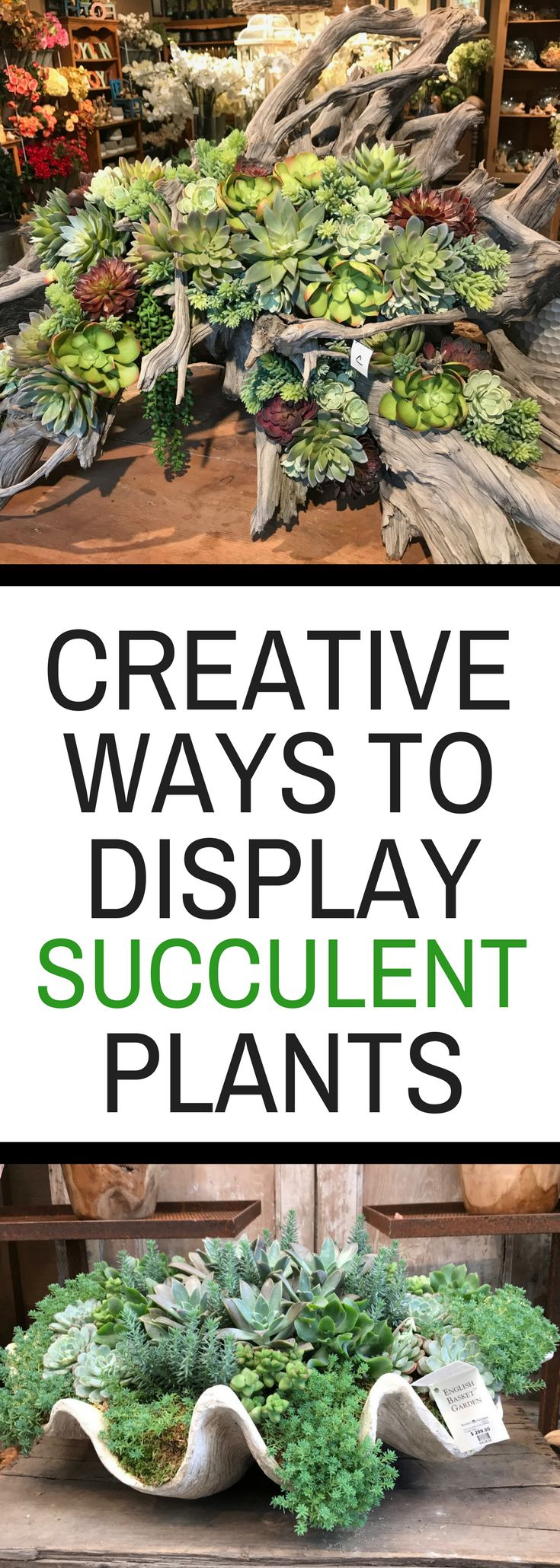 Creative Ways to Display Succulent Plants - such a fun variety