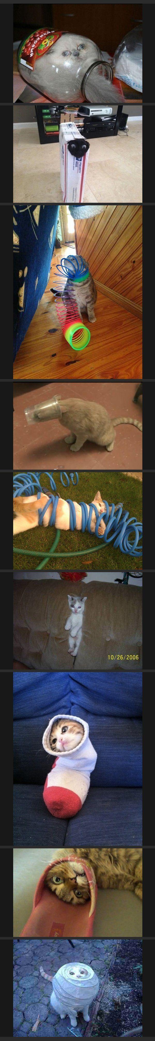Wenn Katzen stecken bleiben