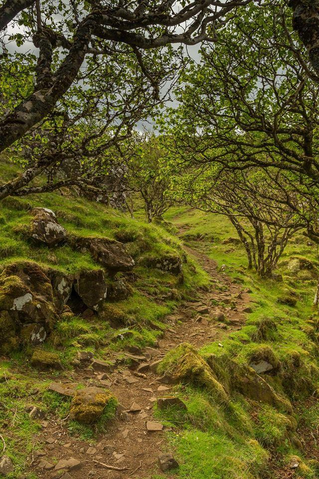 Fairy Glen Path, Isle of SKye